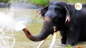 Elephants spa